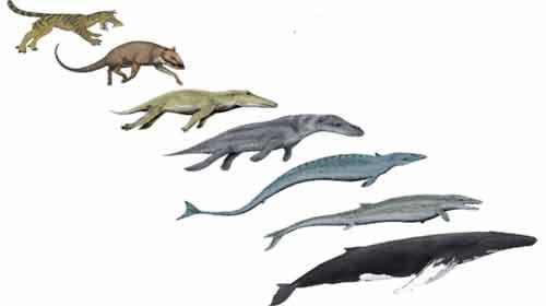 Evolução das baleias