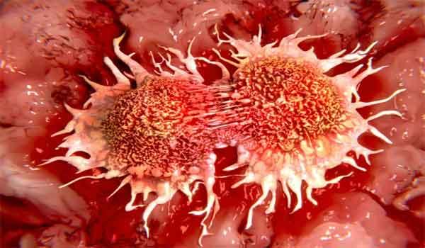 Foto de Ciclo Celular e o Câncer