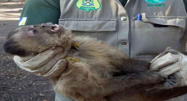 Foto de O que acontece depois de levar um animal selvagem ferido ao veterinário?